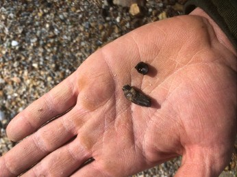Mammal tooth and fish vertebra found by Elliot Mills