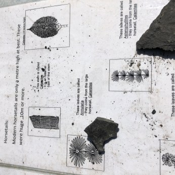 Images of possible finds with examples