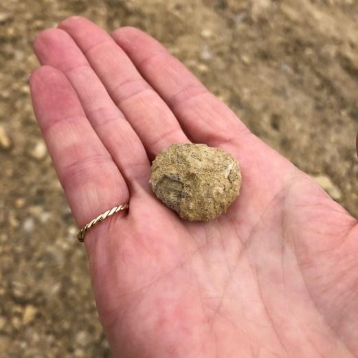 Regular echinoid found by Sam
