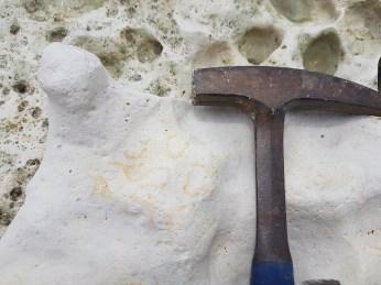 Remains of sea sponge found by Aidan Philpott