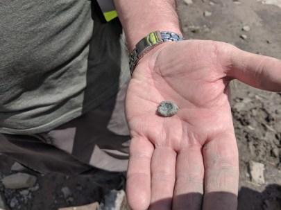 Ichthyosaur Vertebra found by Rob Howe
