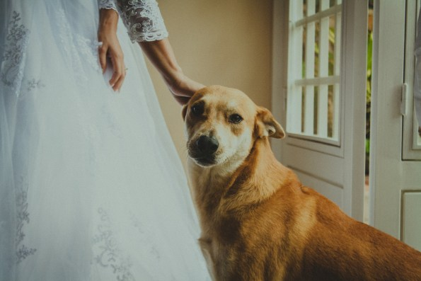 Pets at Weddings: A Guide