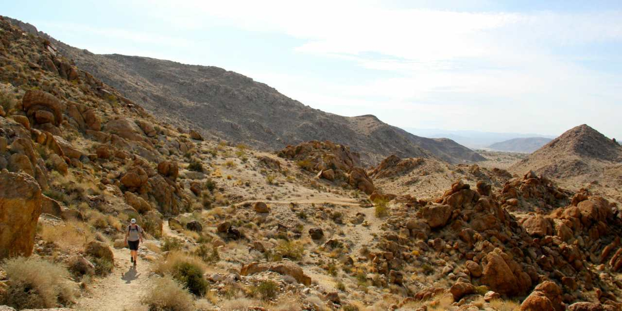 Fortynine Palms Oasis Trail Perfect for Day Hike