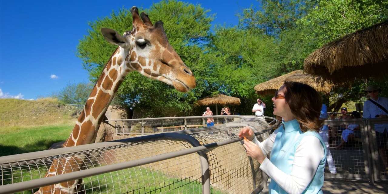 World Giraffe Day Set at Living Desert and Zoo