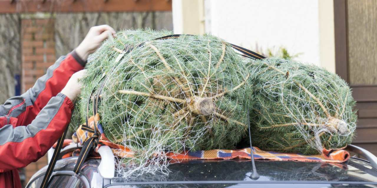 Motorists Face Fines if Tree is Improperly Secured