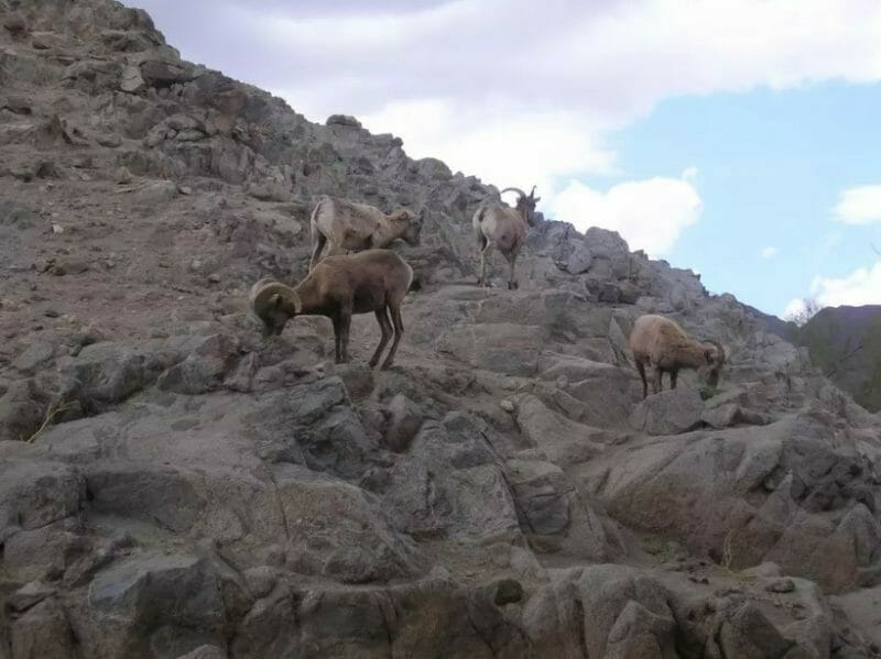 Animals Rarely Attack Hikers, But Missteps Occur