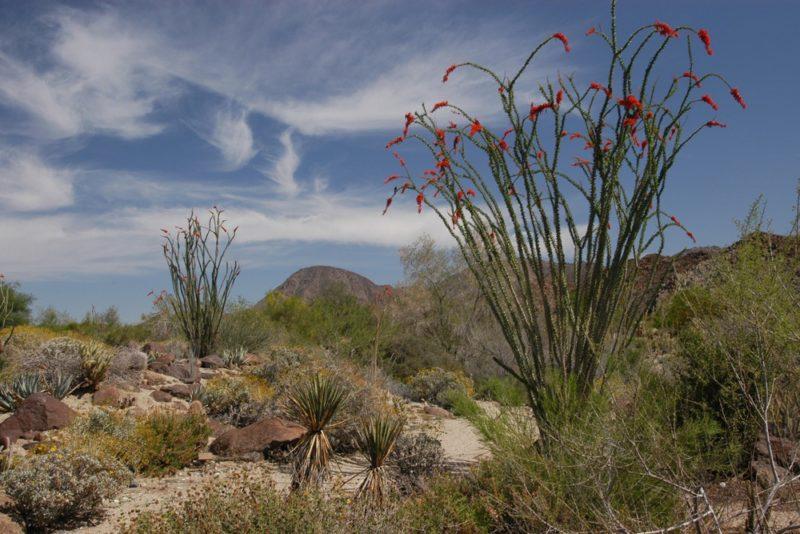 Celebrate Earth Day at Living Desert