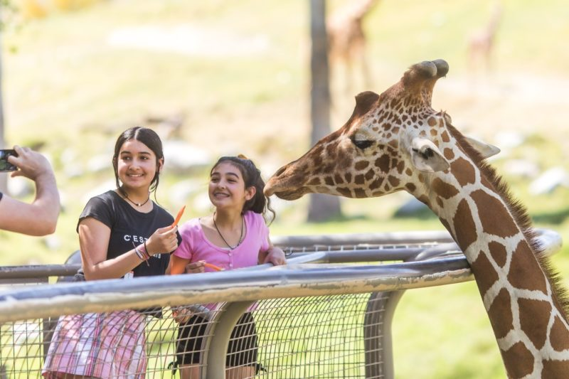 Beat the Heat at Living Desert Zoo and Gardens