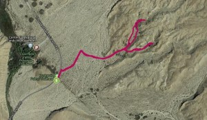 Reptiles Abound on Coachella Valley Preserve Hike