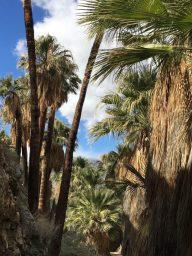 Fern Canyon Trail