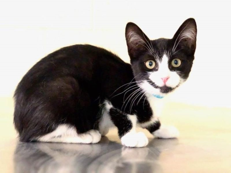 Socks for Sox Campaign Lowers Cat Adoption Fee
