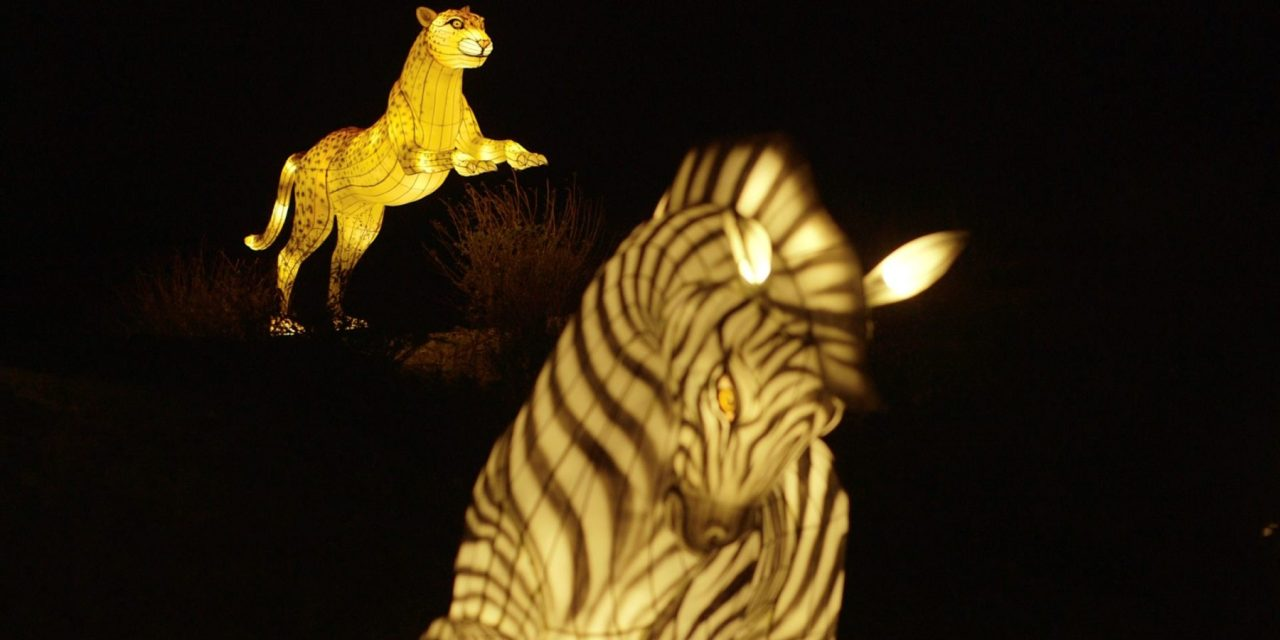 WildLights Spectacular Returns to the Zoo