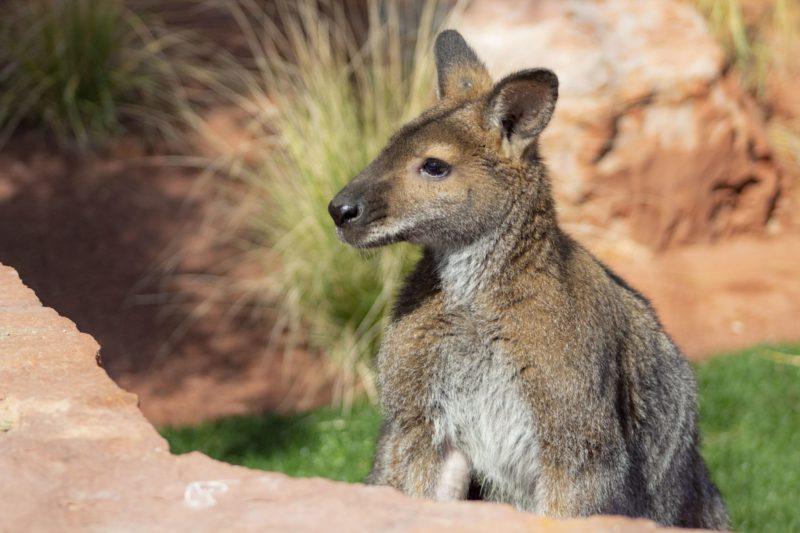 Re-opening: Living Desert Zoo and Gardens