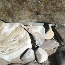 Lingulella davisi brachiopod on shale block