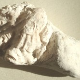 West - oyster fossil