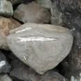 Belemnite in rock