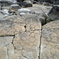 Fossil dehydration cracks