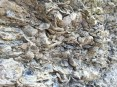 Oysters bed