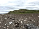 Fossil Collecting along the foreshore at Parton Pay