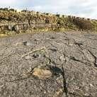 Dinosaur-Footprints-Keats-Quarry-Spyway-41