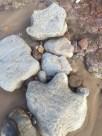 Dinosaur Footprint, Isle of Wight.