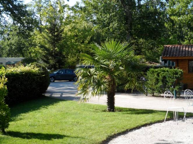 camping-palmier