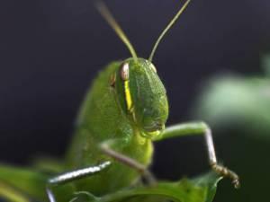 5629_grasshopper-121114-b-getty
