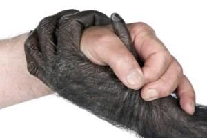 ape-human-02