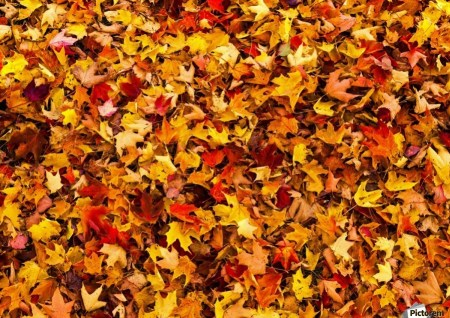 10 Signs You're An Autumn Person
