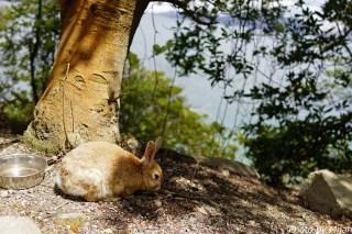 ウサギ島11