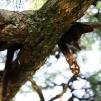 広島県・尾道 ~猫が意外と多い場所~