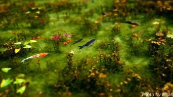 シモネの池07