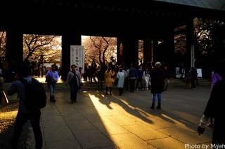 靖国神社・桜03