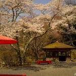 京都・白龍園 ~一日100人限定の日本庭園 -春・桜編-~