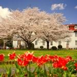 春、桜の旅