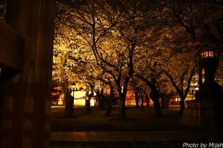 東京夜桜16