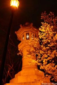東京夜桜17