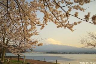 河口湖・桜05