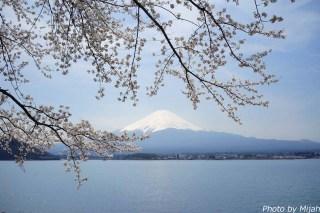 河口湖・桜09
