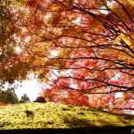 秋・紅葉の白龍園 ~限定公開故の極上の時間を味わえる庭園~