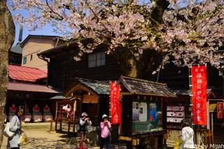 takayamamatsuri31
