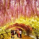 河内藤園 ~世界が認める北九州の芸術の園~