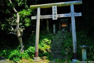 ainoshima-neko20