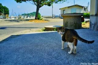 umashima-neko07