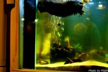 salmon-museum19
