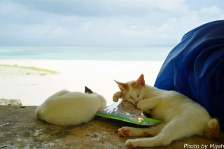 taketomi-cat16