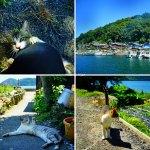 琵琶湖・沖島 ~淡水湖唯一の猫島・1匹の猫との冒険~