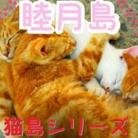 愛媛県の猫島・睦月島 ~松山市の伝統ある島の爽やかな風景と猫たち~