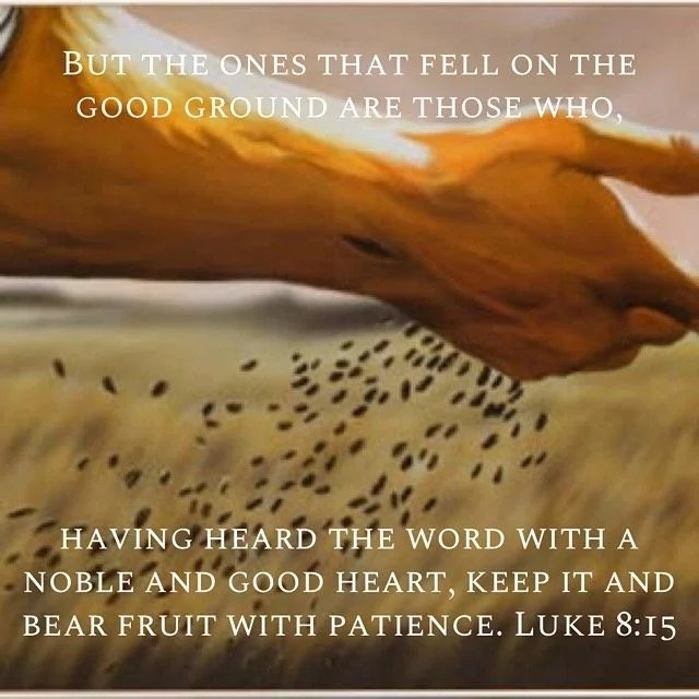 """""""Bear with patience everything that is thrown at you secure in the knowledge that it is then in great trials that you are most in the mind of God."""" - St. Basil the Great #sower #gospel #bible #bibleverse #biblestudy #sunday #sundayreading #patience #joy #peace #longsuffering #goodsoil #fruitsofthespirit #holy #jesus #god #gospelreadings #luke"""