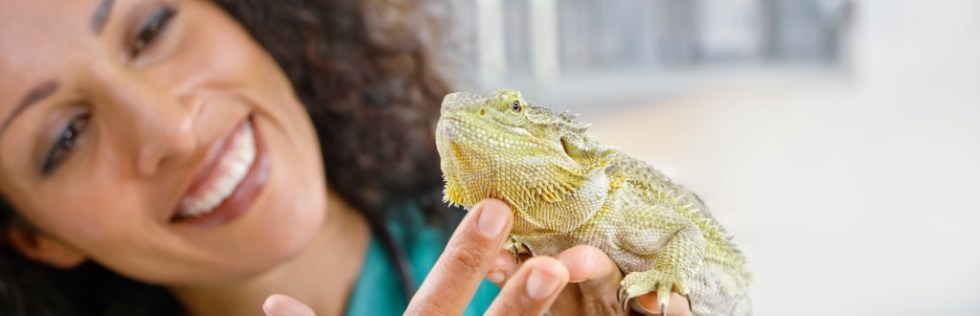 Exotic Animal Care Course Level 3 - Endorsed UK Open College